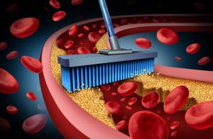 Průřez cévou